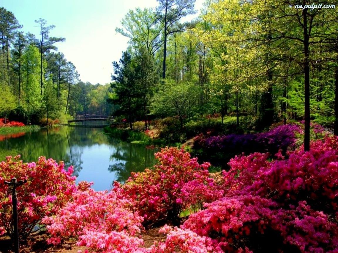 Las  Jezioro  Kwiaty
